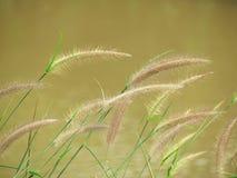 De slag van grasbloemen door de windkracht tegen de achtergrond van de rivier royalty-vrije stock afbeeldingen