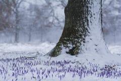 De slag van de de winterlente stock fotografie