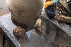 De slager behandelt het geslachte varken met soldeerlamp, haarverwijdering, voorbereiding aan knipsel, de Oekraïne Stock Foto