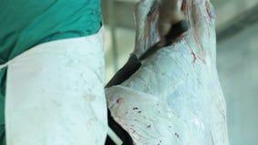 De Slager Takes The Carcass van een Koehuid stock video
