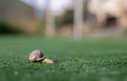 De slak die haar slepen weinig huis langs kunstmatig gras, het onduidelijke beeld het schijnt om een spoor te reduceren stock afbeelding
