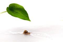 De slak die van de kunstenaar een beeld van een blad trekt stock foto