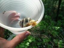 De slak in een plastiek Stock Fotografie