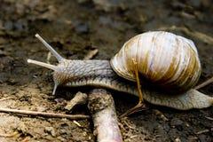 De slak glijdt door een hindernis uit royalty-vrije stock afbeelding