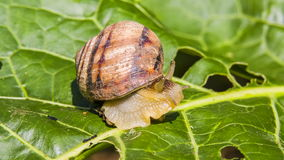 De slak komt uit Zijn Shell stock videobeelden
