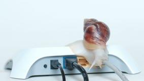 De slak kruipt langzaam langs de draad die met een witte modem of een router wordt verbonden Het concept een langzaam Internet-ve stock videobeelden