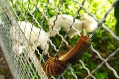 De slak kruipt op de omheining Stock Foto