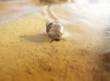 De slak op ondiepten. stock fotografie