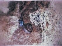 De slak plakte alleen langzaam stock foto