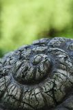 De slak van het steenpantser royalty-vrije stock foto's