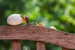 De slakken kruipen langzaam Stock Foto