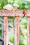 De slakken kruipen langzaam Stock Fotografie
