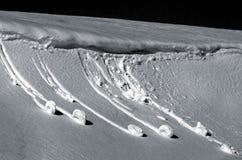 De slakken van de sneeuw Stock Fotografie