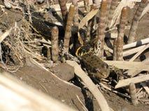 De slang eet een kikker royalty-vrije stock afbeeldingen
