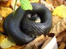 De slang rolde in een bal stock foto's