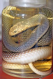 De slang van Aesculapius Royalty-vrije Stock Foto