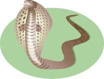 De Slang van de cobra Royalty-vrije Stock Fotografie