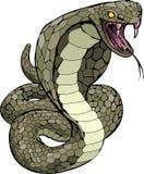 De slang van de cobra ongeveer om te slaan Stock Foto