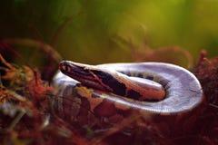 De slangen stock fotografie