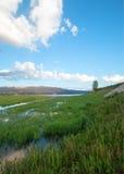 De slangrivier en de grasrijke bank in de ochtend onder cumulus betrekken in Alpien Wyoming Stock Foto