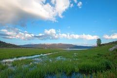 De slangrivier en de moerassige grasbank in de ochtend onder cumulus betrekken in Alpien Wyoming Royalty-vrije Stock Foto