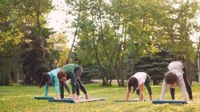 De slanke meisjes in sportkleding doen samen yoga in groep bij openluchtklasse in park die sterkte ontwikkelen en stock footage