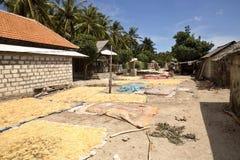 De slechte kwekers van het hutzeewier, Nusa Penida, Indonesië stock fotografie