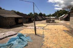 De slechte kwekers van het hutzeewier, Nusa Penida, Indonesië stock afbeeldingen