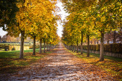 De Sleep Autumn Fall Stone Dirt Walking Lange Perspecti van de parkweg Royalty-vrije Stock Afbeeldingen