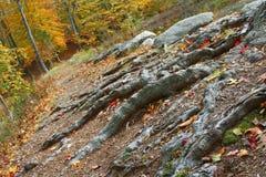 De Sleep van de herfst Stock Afbeeldingen
