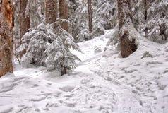 De Sleep van de sneeuwschoen door de Bomen Stock Foto