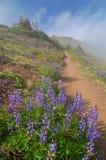 De sleep van de wandeling in de bergen Stock Afbeeldingen