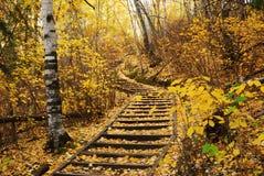 De sleep van de wandeling in de herfstbos stock foto's