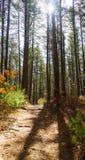 De sleep van de wandeling door het bos Royalty-vrije Stock Afbeeldingen