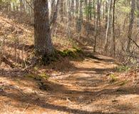 De sleep van de wandeling door het bos Royalty-vrije Stock Afbeelding