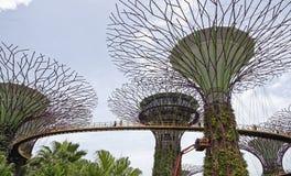 De sleep van ` OCBC Skyway ` gaat bij een hoogte over tussen twee super-bomen Op de sleep zijn toeristen stock fotografie