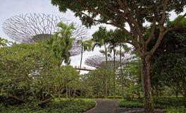 De sleep van ` OCBC Skyway ` gaat bij een hoogte over tussen twee super-bomen Op de sleep zijn toeristen royalty-vrije stock fotografie