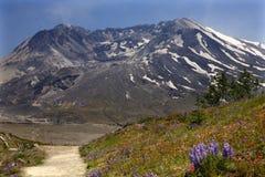 De Sleep van Wildflowers zet Heilige Helens op royalty-vrije stock afbeeldingen