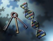 De sleutels tot DNA van het lifesraadsel Stock Fotografie