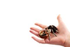 De sleutels van de auto als droom Stock Afbeelding