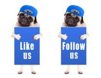 De slimme pug puppyhond met blauw volgt ons en als ons teken en het dragen van blauw die GLB, op witte achtergrond wordt geïsolee Stock Foto's