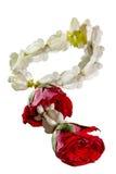 De slingerjasmijn en nam bloem op witte achtergrond wordt geïsoleerd die toe Stock Afbeelding