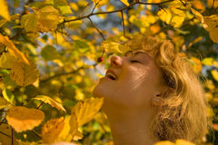 De smaak van de herfst Stock Afbeelding
