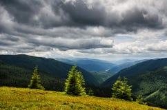 De smaragdgroene bomen van de bergpijnboom Stock Fotografie