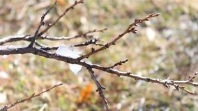 De smeltende sneeuw vertakt zich uit stock footage