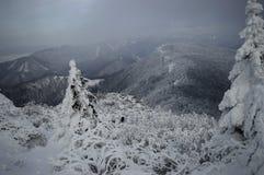 De snöig kullarna Royaltyfri Bild