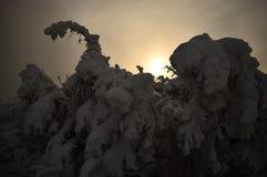 De snöig träden Fotografering för Bildbyråer