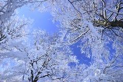 De snöig träden Royaltyfri Foto