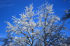 De snöig träden Royaltyfri Bild