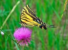 De Snack van de Nectar van de middag Stock Foto